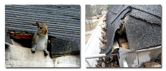 Roofing Repairs And Replacement Tampa Bay Orlando Florida